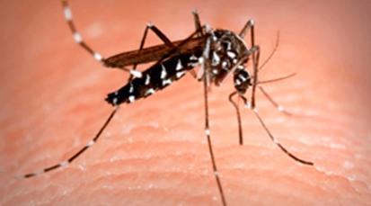 Aumento de dengue prende las alarmas en Cúcuta