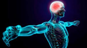 ¿El cerebro regula la sensación de dolor?