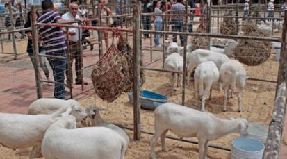 Cúcuta le abre espacio al sector agropecuario: 56° Feria Agropecuaria y Equina