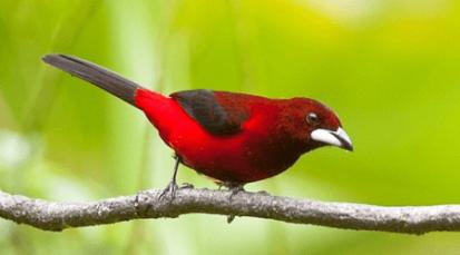 Habitantes de Arboledas eligen su ave oficial
