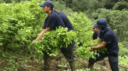 Gobierno Nacional anuncia erradicación de cultivos ilícitos en 25 mil hectáreas de la zona del Catatumbo