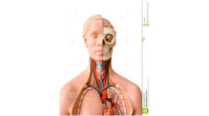 Bienvenido el maniquí para estudiar medicina