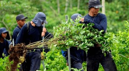 Colombia cada vez está más alejada de la erradicación de la coca, según últimos informes de la SIMCI