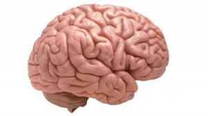 Los beneficios de caminar para el cerebro