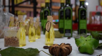 Sacha Inchi, alternativapara la sustitución de coca en la región