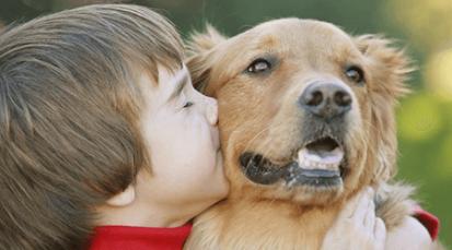 Una mascota para navidad: los animales no son juguetes y requieren de cuidados para toda su vida