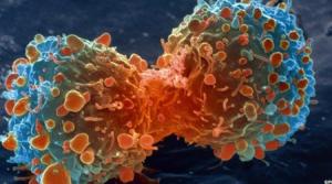 Innovadora herramienta que detecta enfermedades en poco tiempo y a bajo costo
