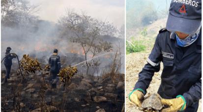 300 hectáreas destruidas en Cerro Tasajero por incendio forestal
